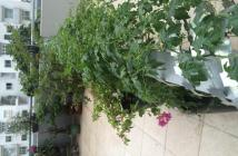 Căn hộ có sân vườn riêng - Mua căn hộ giá rẻ - Nhận nhà ở ngay đón tết Đinh Dậu