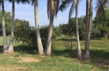 Bán Đất Vườn Đường Số 10 P Long Phước  Quận 9 Giá 1,6tr/m2