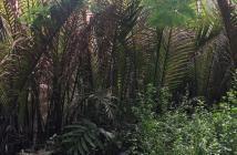Đất thô vườn Nhơn Đức Nhà Bè giá rẽ vị trí đẹp.