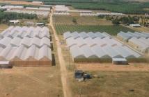 Bán đất vườn ở Bình Thuận giá chỉ 50 triệu/1000m2 có sổ hồng công chứng